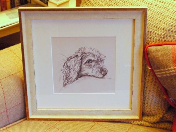 Wire Haired Dachs - Dax D7 -  head  1940's print by Lucy Dawson